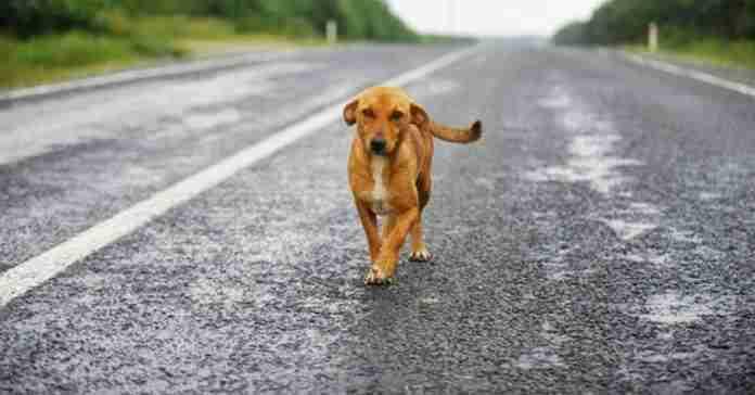 Trova cane smarrito sul Grande Raccordo Anulare, mamma e figlia lo salvano